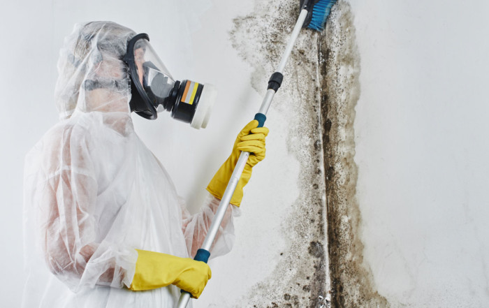 Ultimate Cheat Sheet on Mold Remediation Aurora IL
